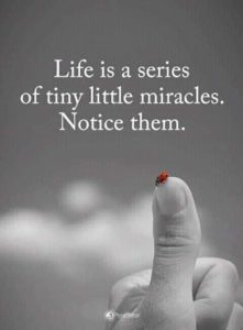Life is a series of little miracles